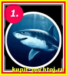акулий жир - главный компонент мази